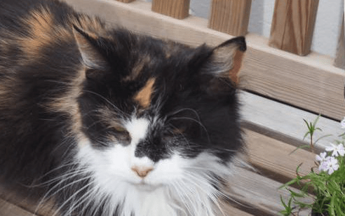 How Shropshire Cat Rescue worked with Give as you Live