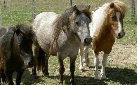 How Remus Memorial Horse Sanctuary worked with Give as you Live