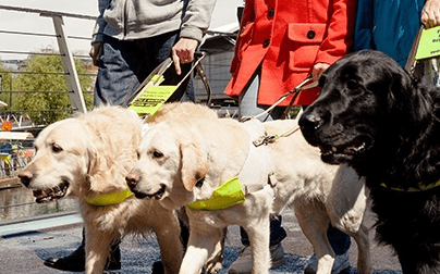 How Guide Dogs worked with Give as you Live