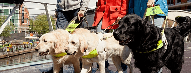 Guide Dogs case study