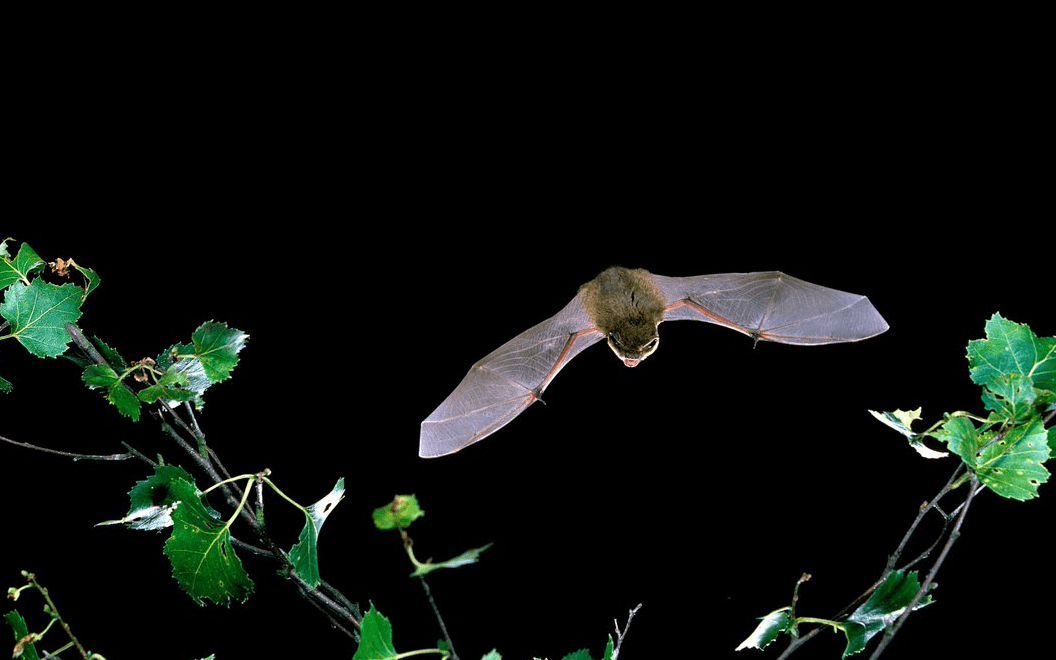 How Bat Conservation Trust worked with Give as you Live